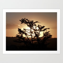Sunset through acacia tree Art Print