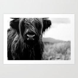 Scottish Highland Cattle Baby - Black and White Animal Photography Art Print