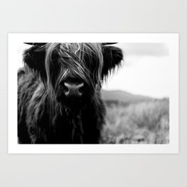 Scottish Highland Cattle Baby - Black and White Animal Photography Art Print