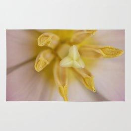 Inside a Tulip Rug