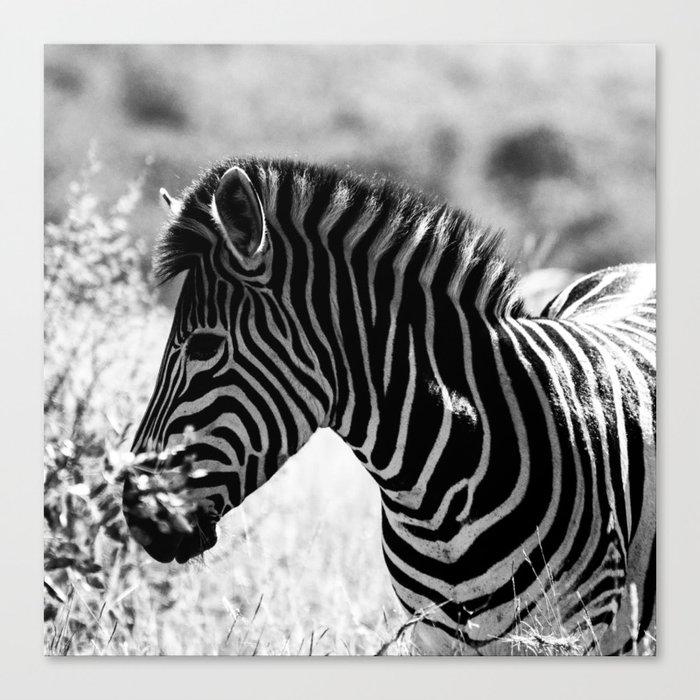 Safari Zebra Print Canvas Print