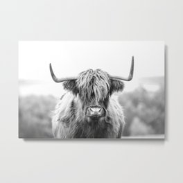 Highland Cow Longhorn in a Field Black and White Metal Print