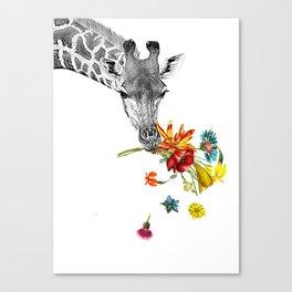 Hey! Canvas Print