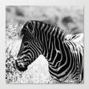 Safari Zebra Print by glasshousedesign