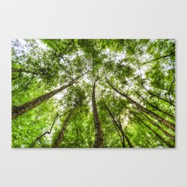 The Ancient Tree Canopy Canvas Print