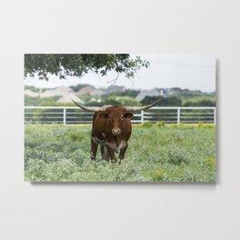 Brown and white Longhorn bull standing under tree Metal Print