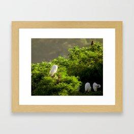 Nesting Egrets Framed Art Print