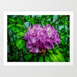 Fine Wine Cafe Light Purple Rhododendron Art Print