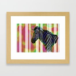 Colorful zebra Framed Art Print