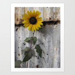 Sunflower & Rust 1 Art Print