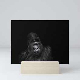 Portrait of a male gorilla on black background. Grave look of the great ape Mini Art Print