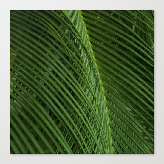 Palm leaves 2 Canvas Print