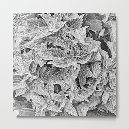 coleus black and white Metal Print