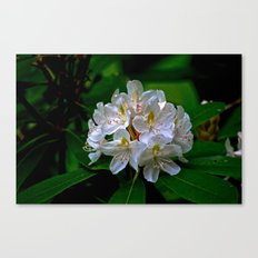 Rhododendron Bloom at Falling Water Canvas Print