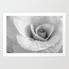Camellia Black and White Art Print