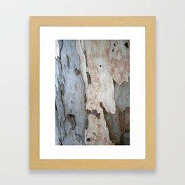 Bark Of A Eucalyptus Tree  Framed Art Print