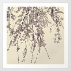 Raintree 2 Lavender pink flower blossoms Art Print
