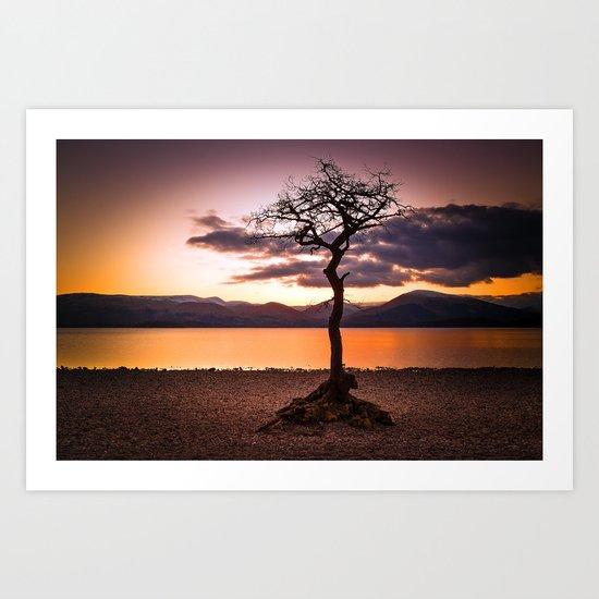 Milarrochy Bay Tree Art Print