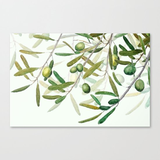 Green Olive watercolor painting Canvas Print