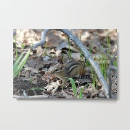 Chipmunk on the Forest Floor Metal Print
