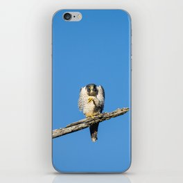 A Grumpy Peregine Falcon iPhone Skin