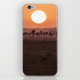 Sunset in the palm trees iPhone Skin