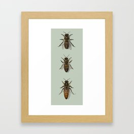 Honey Bee Family Framed Art Print