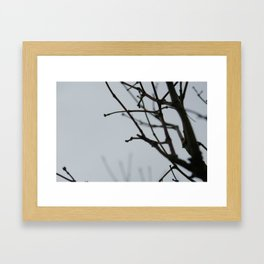 Branches Framed Art Print