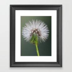 Dandelion Seed Head Framed Art Print