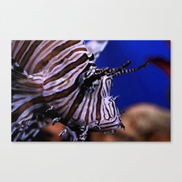 Lion fish Canvas Print