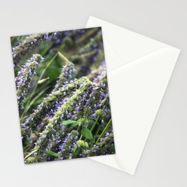 Longwood Gardens Autumn Series 413 Stationery Cards