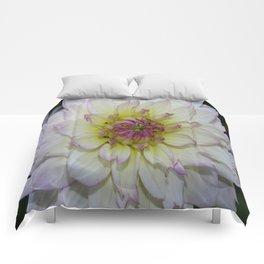 Dahlia Pastel Tones Comforters