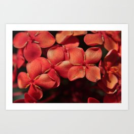 shiny flowers Art Print