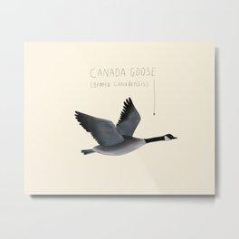 Canada Goose Metal Print