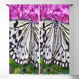 Beautiful Butterfly Blackout Curtain