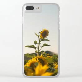 Sunflower (3) Clear iPhone Case