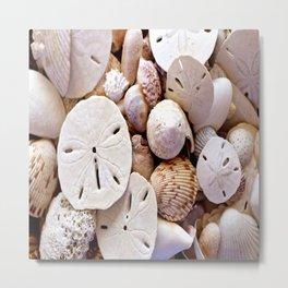 Seashells And Sand Dollars Metal Print