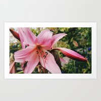Mother Lily Art Print