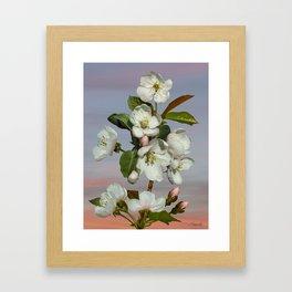 Spade's Apple Blossoms Framed Art Print