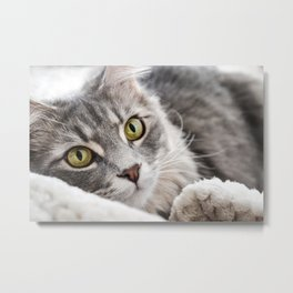 Cat lying with wide eyes open Metal Print