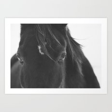 Close Up Black Horse Photograph Art Print