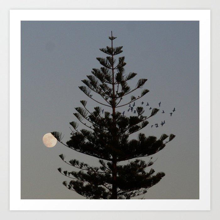Araucaria tree, full moon, flight of birds Art Print