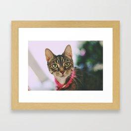 Feline Love Framed Art Print