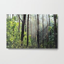 Forest Nature Metal Print