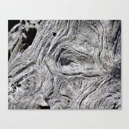 Driftwood #11 Canvas Print
