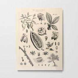 Cacao Vintage Illustration Metal Print