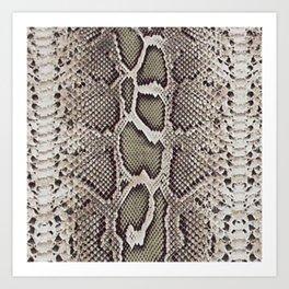 Faux Boa Constrictor Snake Skin Design Art Print
