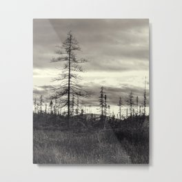 trees in a marsh Metal Print