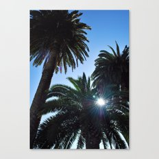Ray of Sun through Palm Trees Canvas Print