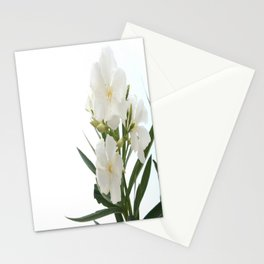 White Oleander Flowers Close Up Isolated On White Background  Stationery Cards